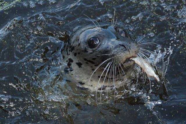 Zeehondensafari Aquazoo Jouw Ontdekkingstocht Start Hier