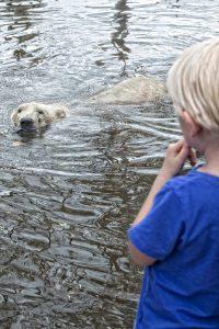 aquazoo ijsbeer kindje