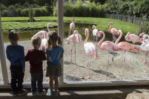 flamingo's kinderen aquazoo