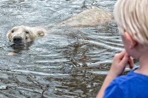 ijsbeer kindje aquazoo