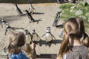 pinguin kinderen aquazoo