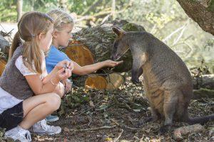 wallaby kinderen voeren