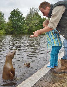 zeehondensafari visjes voeren