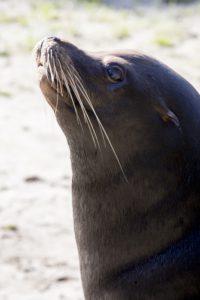 zeeleeuw spetter spektakel