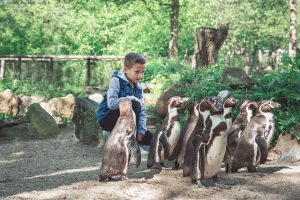 Jongetje zit tussen de humboldt pinguïns in AquaZoo