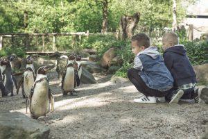 Kinderen in het pinguïnverblijf van AquaZoo